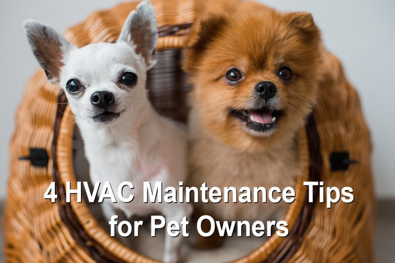 do-you-own-a-pet-here-s-4-hvac-maintenance-tips-to-help-you-live-most-comfortably-with-them
